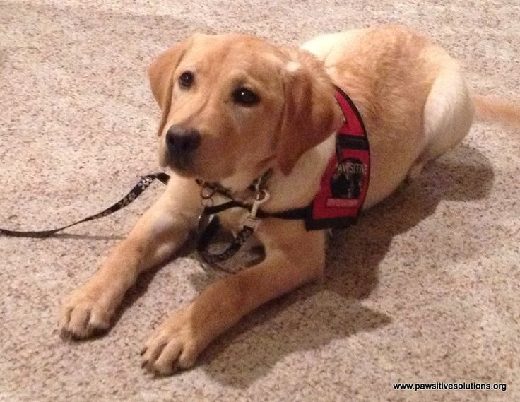 Simply Pawsitive Dog Training