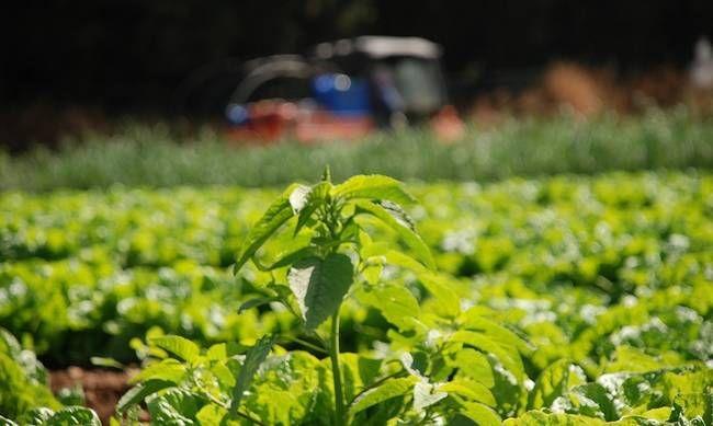 Πριμ 443 εκατ. σε γεωργούς και κτηνοτρόφους για βιολογικά προϊόντα