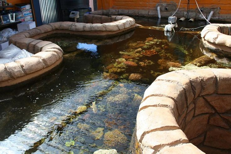 Backyard Saltwater Pond Reef Pool Aqua Pinterest