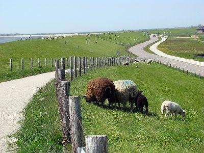 the island Texel photos