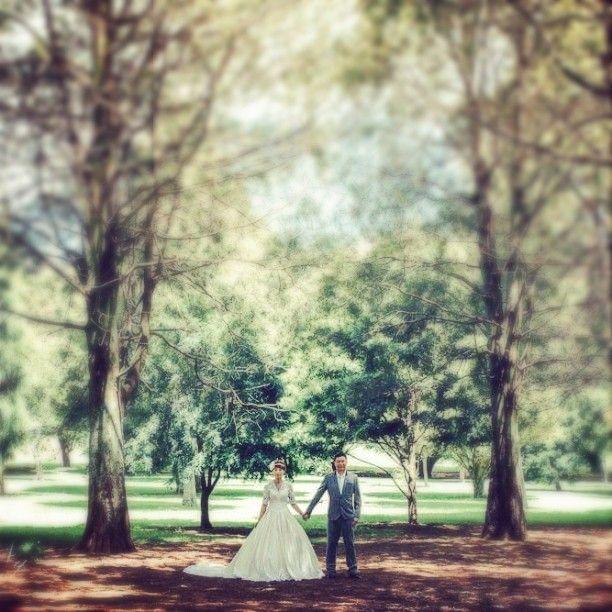 【albertngphotos】さんのInstagramをピンしています。 《#wedding #prewedding #bridal #bride #groom #Auckland #NewZealand #CornwallPark #forest #tree #結婚 #婚紗 #婚攝 #花嫁 #花婿 #結婚式 #ブライダル #紐西蘭 #奧克蘭 #ニュージーランド #オークランド #樹 #森林 #木  info/情報/查詢: enquiry@albertngphotography.com》