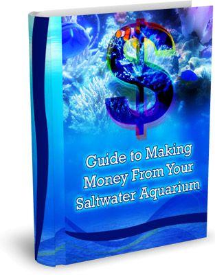 Saltwater Aquarium Advice