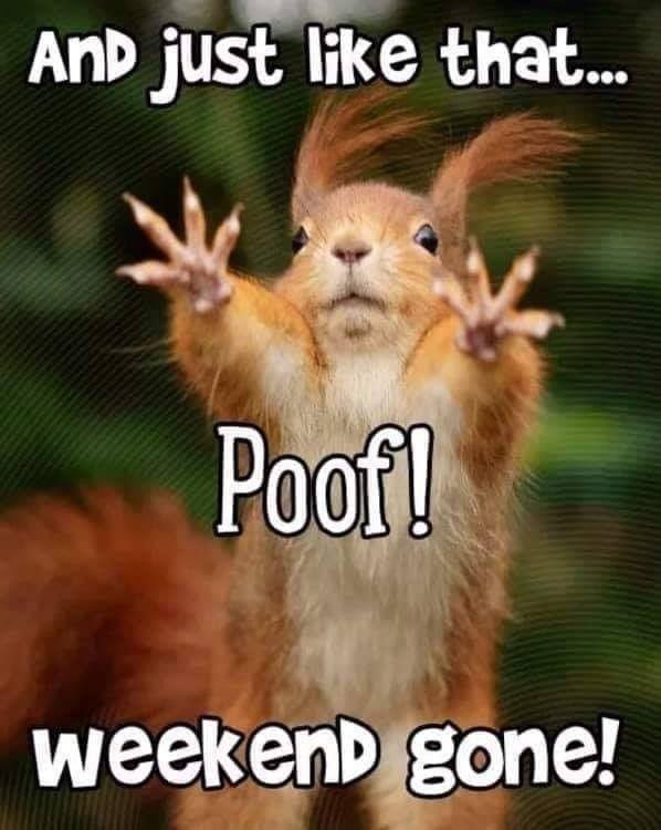 Happy Monday Funny Good Morning Memes Morning Quotes Funny Funny Good Morning Quotes