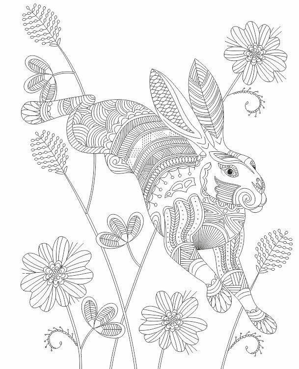 Advanced Coloring Jack Rabbit Page