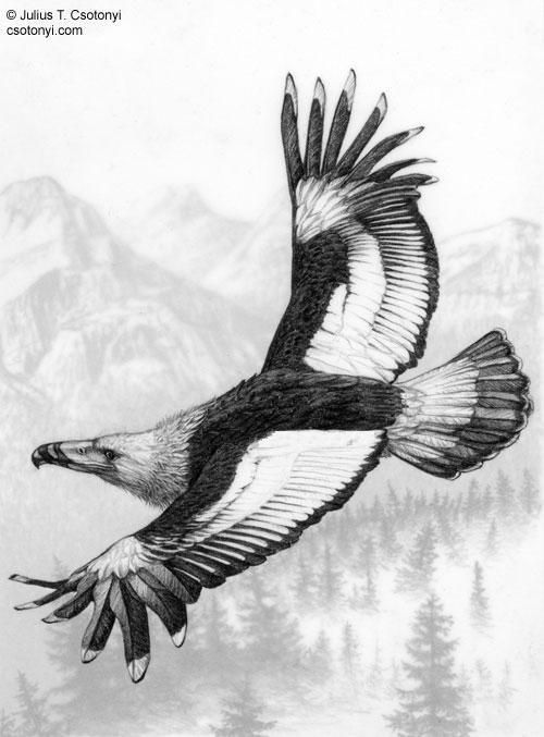 Argentavis : Burung Prasejarah Terbesar Didunia | wisbenbae