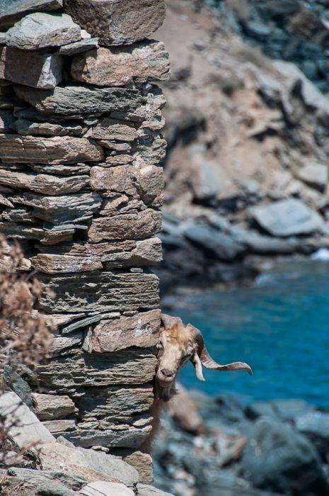 Wild nature of Sifnos island