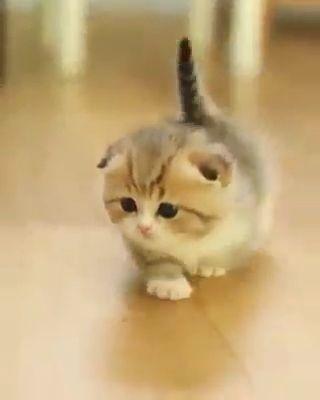 Klicken Sie auf Besuchen, um weitere tolle Videos zu sehen. #Cats #catsofinstagram #kitty #kittens #cute …   – Cat