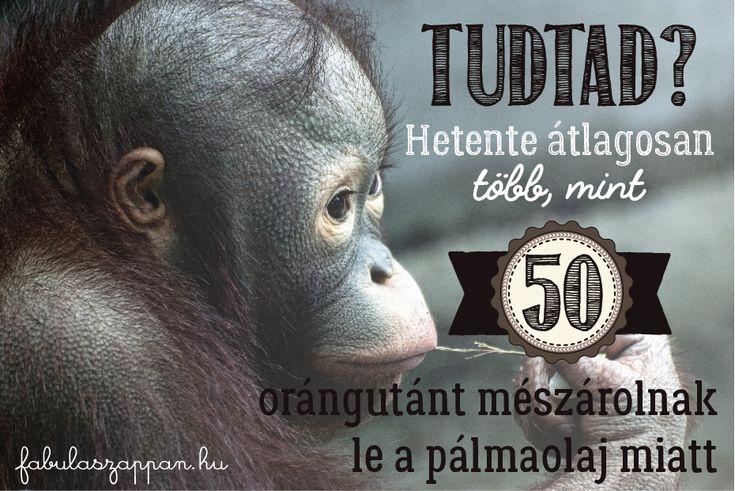 Tudtad? Hetente átlagosan több, mint 50 orángutánt mészárolnak le a pálmaolaj miatt!