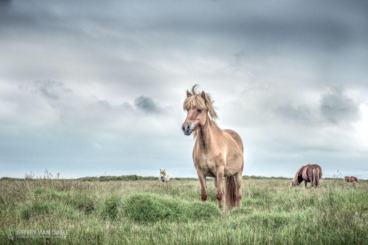 Icelandic Horse by Jeffrey Van Daele on 500px