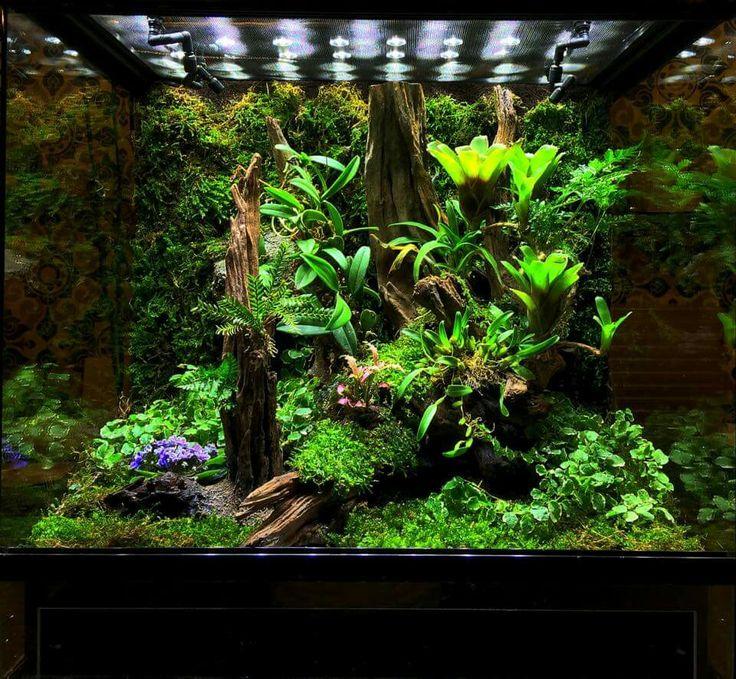 die besten 25 gecko vivarium ideen auf pinterest gecko terrarium kronengecko und frosch. Black Bedroom Furniture Sets. Home Design Ideas