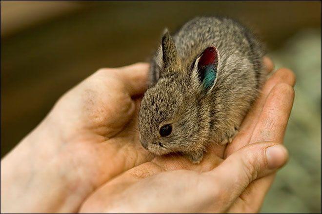 Das süßeste Kaninchen der Welt –  #das #der #kaninchen #süßeste #Welt
