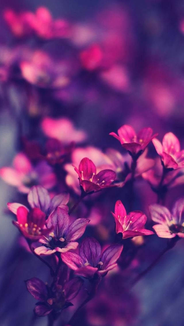 Purple wildflowers iPhone 5s Wallpaper http//www