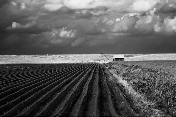 Westpolder by Anjo de Haan.
