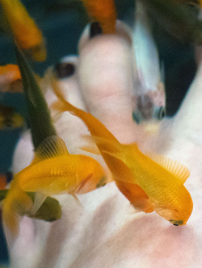 Best 25 fish pedicure ideas on pinterest summer nails for Doctor fish pedicure