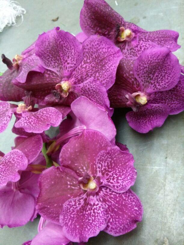 Orquídeas para nuestros arreglos florales   Bourguignon Floristas #orchids #flowers