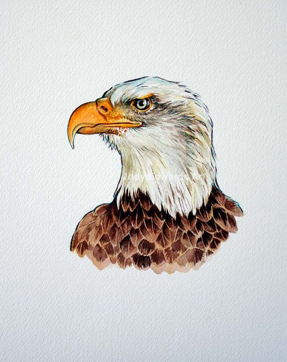Retrato de águila calva acuarela Original pintura por jodyvanB