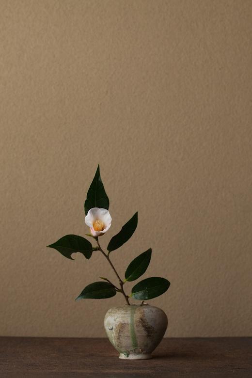 2012年2月18日(土) 名前に惹かれました。 花=椿「雪中花」(ツバキ/セッチュウカ) 器=猿投小壺(平安時代)