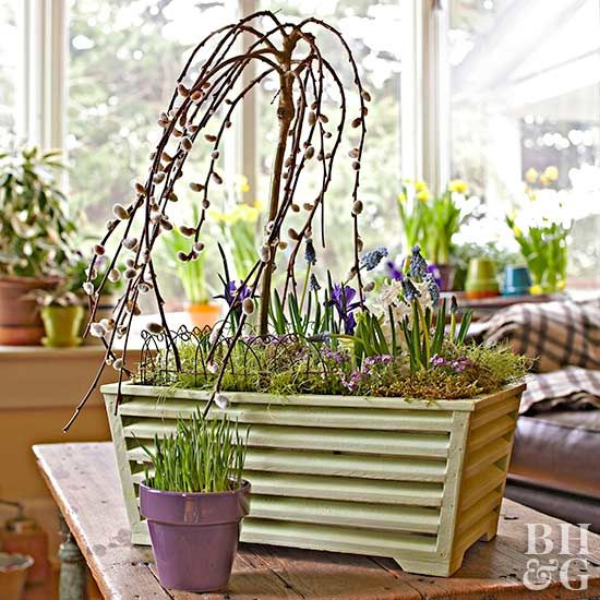 Break out of the winter doldrums with an enchanting little weeping pussy willow tree.