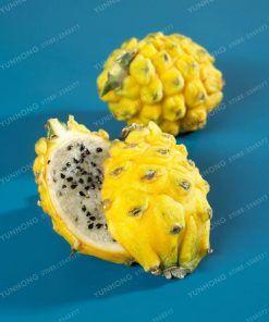 100PCS Yellow Pitaya Fruit Seed