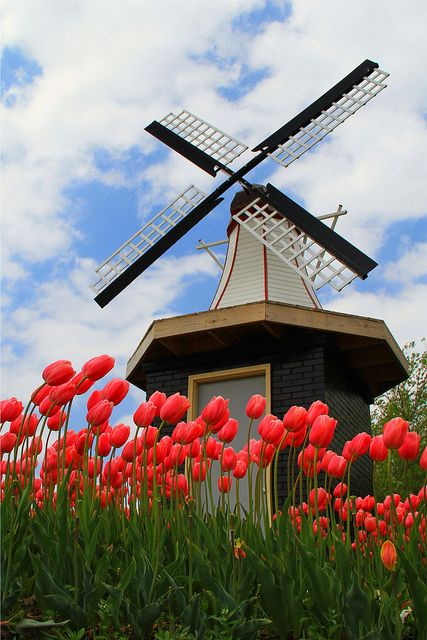 I am from Holland MI and every year we celebrate Tulip Time. Our city is covered with colorful and bright tulips. This would be where my #ridecolorfully adventure begins.