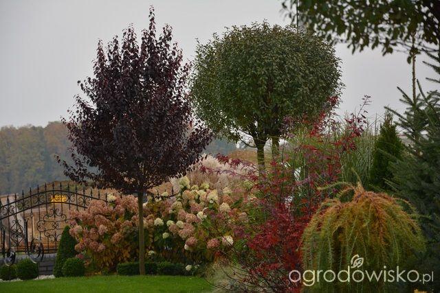 Mój skromny ogród - strona 419 - Forum ogrodnicze - Ogrodowisko
