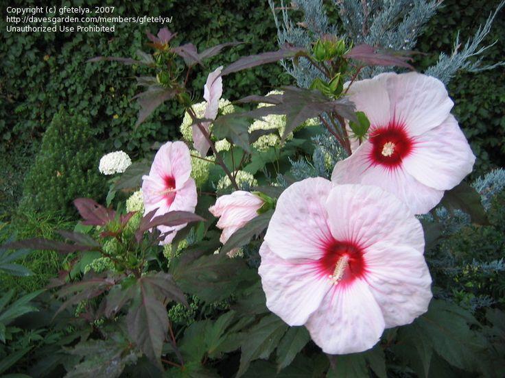 Perennial Flower Garden Ideas Pictures 9 best old plow ideas images on pinterest | garden ideas, outdoor
