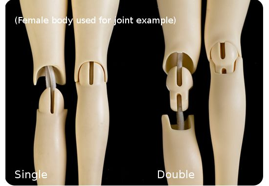 A-S 1/3 Male Muscle Body - Double Jointed (BH310021)