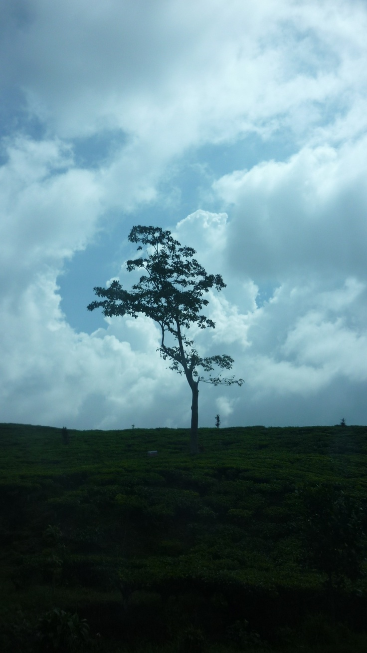 One lonely tree, strong against the sky