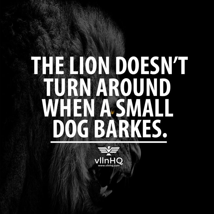 Vlln Hq Lifestyle For Upcoming Villains Positive Fitness Quotes Wise Man Quotes Small Dogs