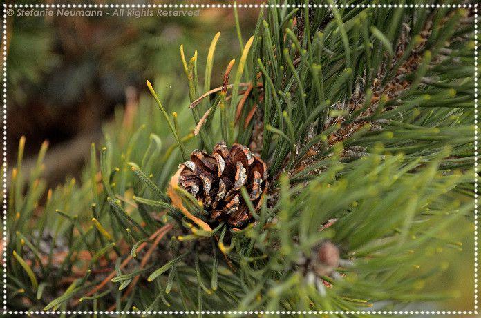 Kokopelli Bee Free Newsletter - Yule 2015 by/ von Stefanie Neumann | #KokopelliBeeFree
