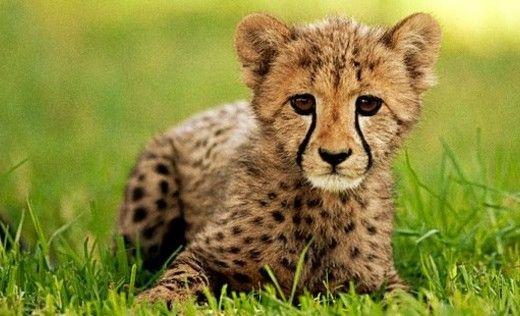 San-diego-zoo-safari-park-4f5e24d746d09d675b000c6f