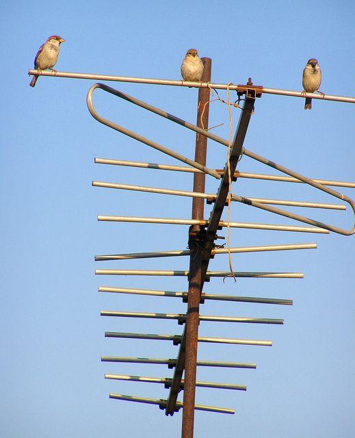 111 best antennas images on pinterest radios 4 element - Cable antena satelite ...