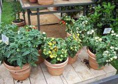 Ein Balkon-Gemüsegarten für die Selbstversorgung