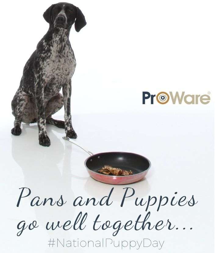 We may be biased but Pans and puppies go well together! #nationalpuppyday