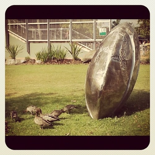 Can you spot this family on campus? #bestofbothworlds #wildlife #usc  (Taken with Instagram)