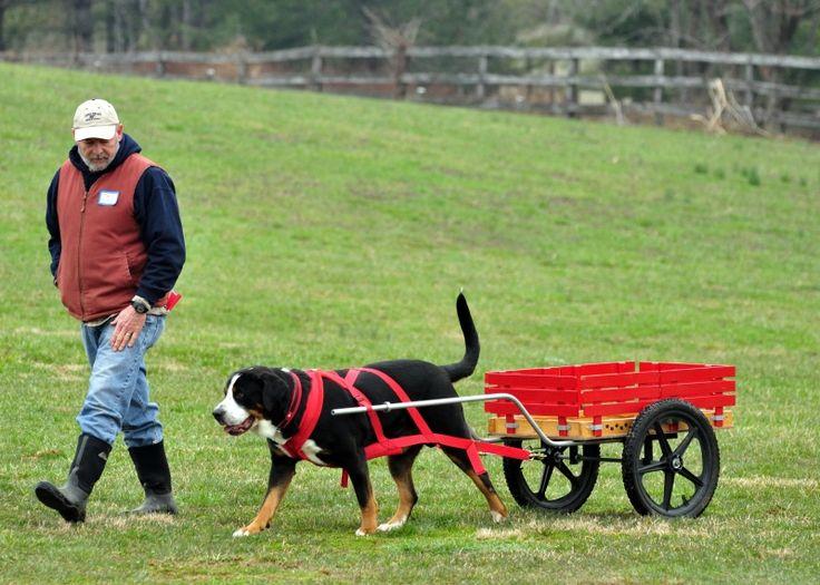 Tirar de un carro - (Accesorios para Perros)   Perros.com