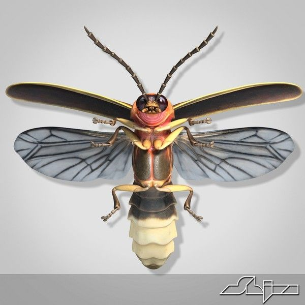 maya firefly bug flying pose | Headboard | Pinterest | D ...