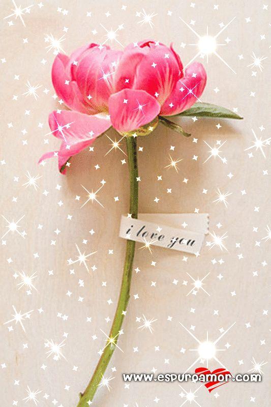Frase de amor (I love you) con imagen gif de una flor animada con brillantes - http://espuroamor.com/2014/03/frase-de-amor-i-love-you-con-imagen-gif-de-una-flor-animada-con-brillantes.html #Animaciones, #Frasesromanticas, #Imagenesdeamor, #Imagenesderosas