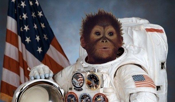 Laika la perra, varios monos llamado Albert y Héctor la rata - estos son sólo algunos de los animales que han sido lanzados al espacio durante años. Otros tipos de animales que se envían al espacio - y que posteriormente flotaba alrededor - son conejillos de indias, tritones, moscas de la fruta, grillos, arañas y medusas (por nombrar sólo algunos).  hay una teoria conspirativa que dice que en el espacio hay cadaveres de astronautas sovieticos