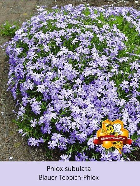 Bienenfreundliches Staudenbeet 21 Pflanzen Blau Weißes Beet