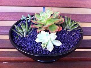 Black painted pot for cactus garden