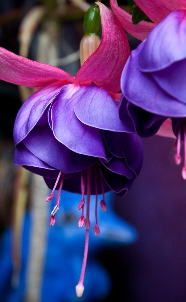 Flores para enfeitar meus muros.