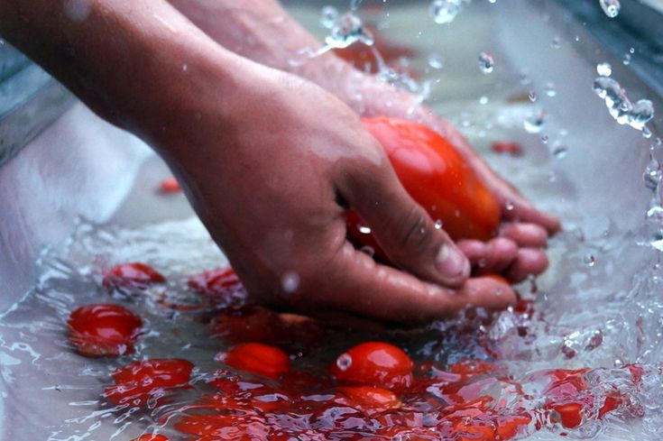 Washing tomatoes for the Chunky and Smoky Roast Tomato Soup recipe