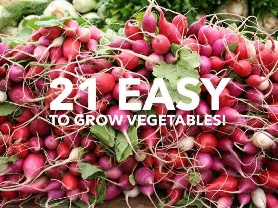 Still Trying To Decide Which Vegetables To Grow This Spring? Take A Look At  This List Of 21 Easy To Grow Vegetables For Some Ideas.