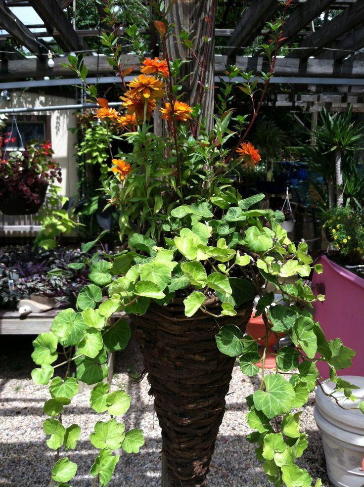 Fall hanging basket   Container Gardening   Pinterest