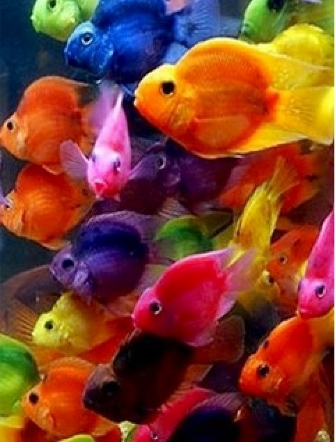 brightly colored fish extreme colors pinterest fish
