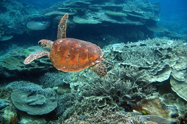 The Great Barrier Reef -Wildlife Earth is on Google+ Click the link on my page Wildlife Earth