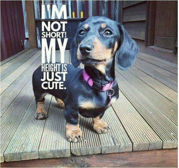 17 best images about dachshund names for boys and girls on