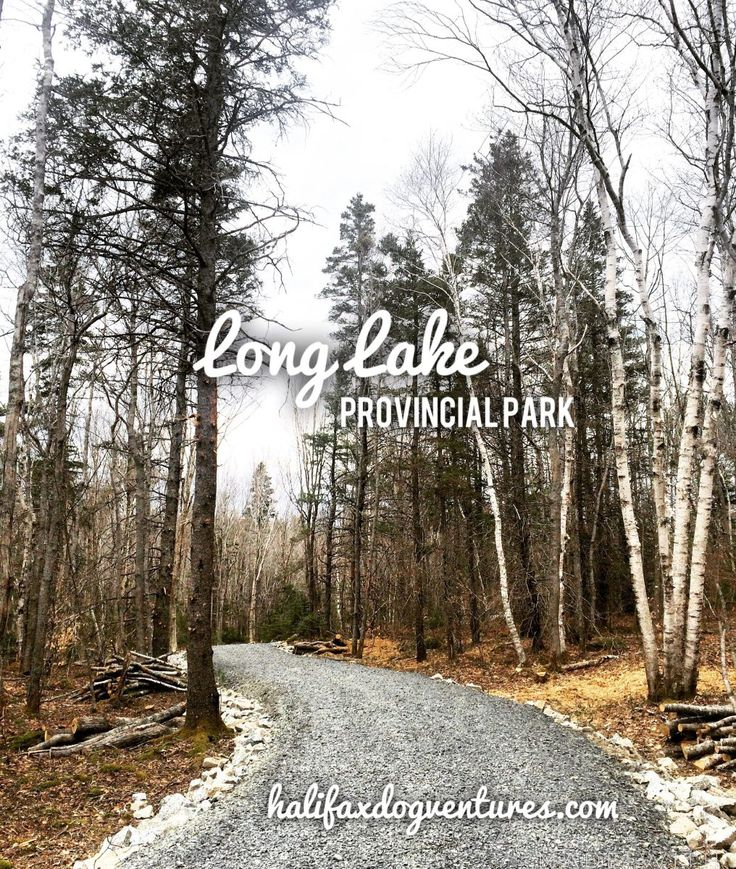 Long Lake Provincial Park in Halifax, Nova Scotia is a dog (and human) oasis just minutes outside of the City. halifaxdogventures.com
