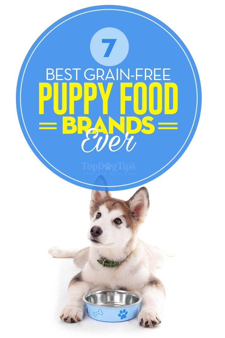 The 7 Best Grain Free Puppy Food Brands Best Dog Food For